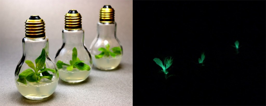 Alex Krichevsky Glowing Plants